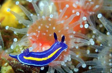 美丽的海洋色彩生物[组图]