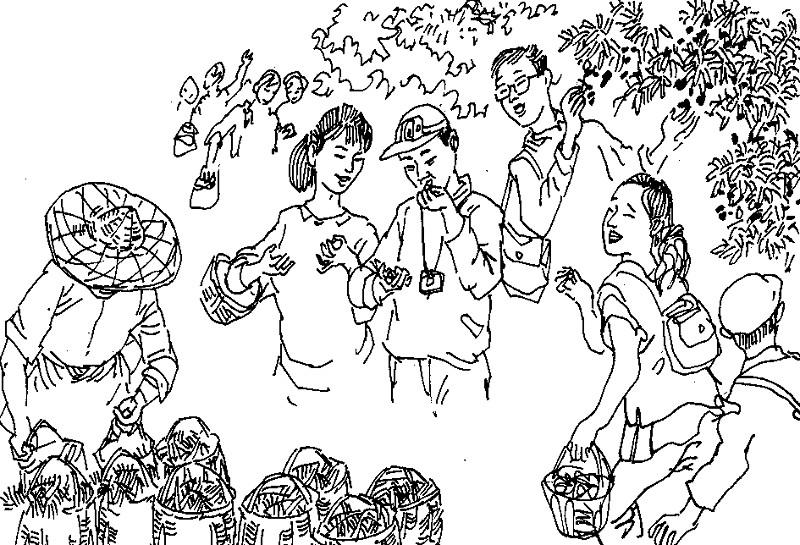杨梅的手绘简单