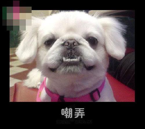 壁纸 动物 狗 狗狗 500_447