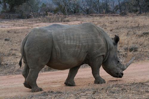 南非国家公园野生动物天堂