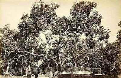2.最长寿的树