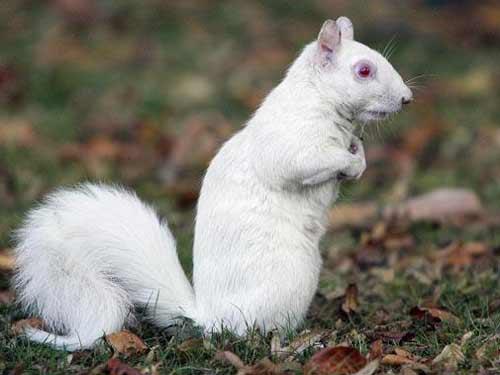 另类之美 那些患有白化症的动物