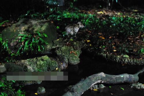 热带雨林中唯一的夜间动物园(组图)