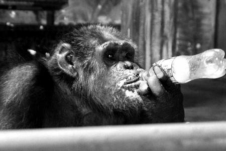 笔者昨日在雅戈尔动物园看到