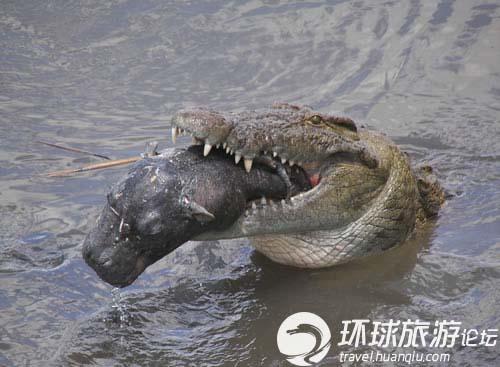 世界上有多少种鳄鱼_世界上最的鳄鱼_海底一万米有多恐怖