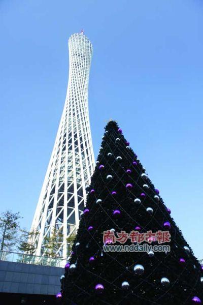 广州塔将竖起广州最高的美式圣诞树