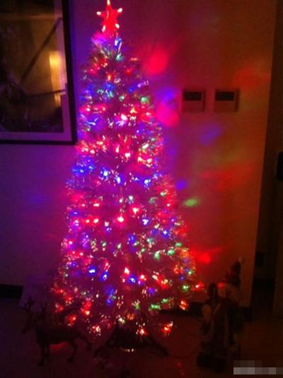 洛伊 张咪/张咪洛伊欢度圣诞装饰圣诞树温馨过节