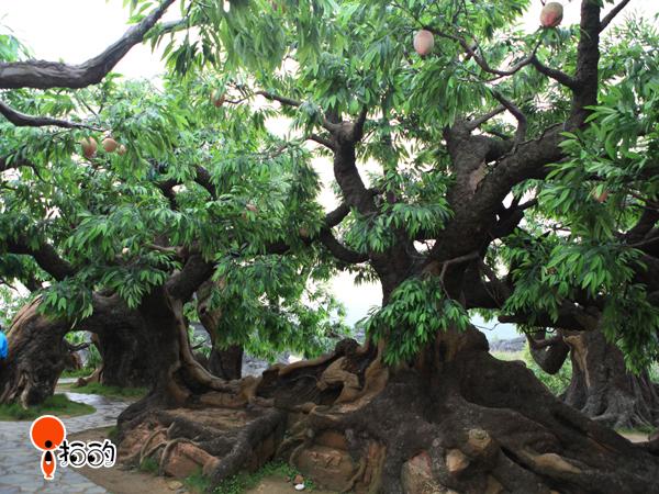欧式i绿化树木图片