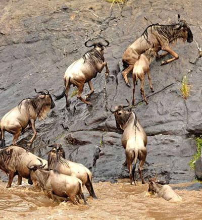 肯尼亚马赛马拉野生动物保护区