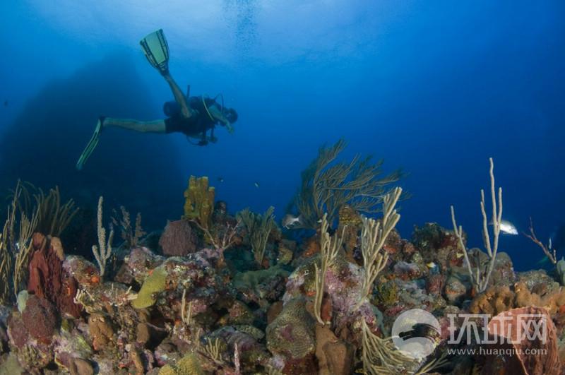 加勒比海 中国/萨巴岛,荷兰的加勒比海...