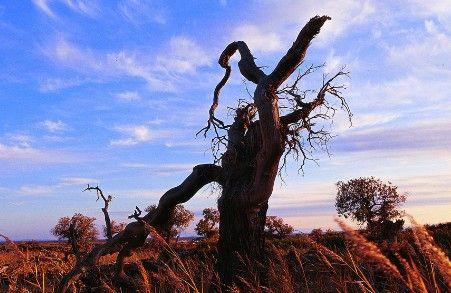 木垒胡杨林   木垒胡杨林位于新疆昌吉州木垒鸣沙山北30公