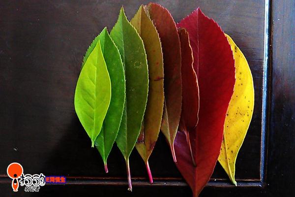 树叶步骤图解教程