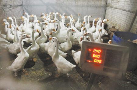 宁波老三区和鄞州区菜市场尚未解禁活禽交易-