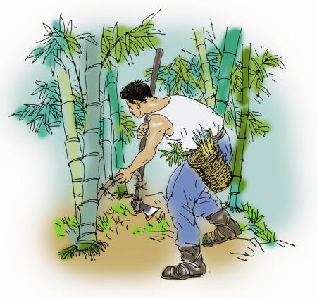 竹鞭的生长规律