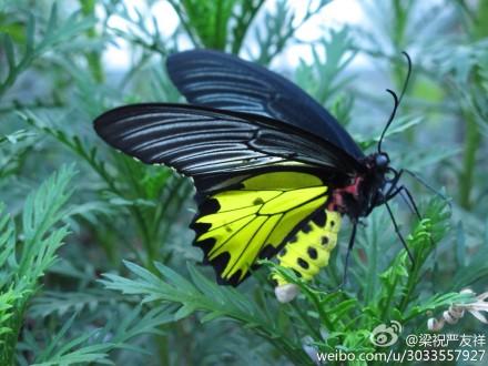 蛹化蝶的全过程,你见过吗?--中国宁波网-新闻中心图片