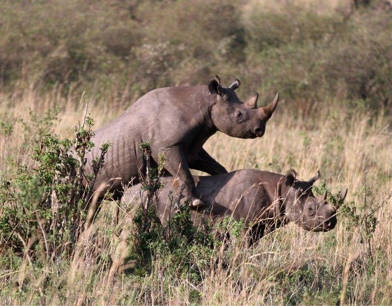 到肯尼亚看动物暴力性交