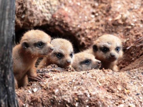 萌萌哒!看美国动物园里的小萌物