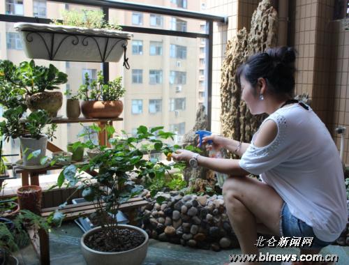 东海明园三户养花人家:小阳台也有大花园的梦