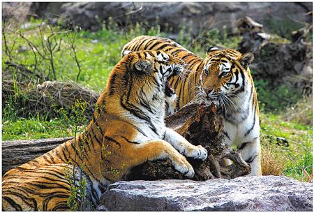 东钱湖雅戈尔动物园