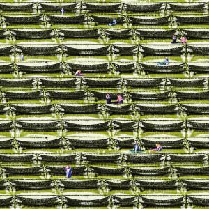 紫菜装片结构图