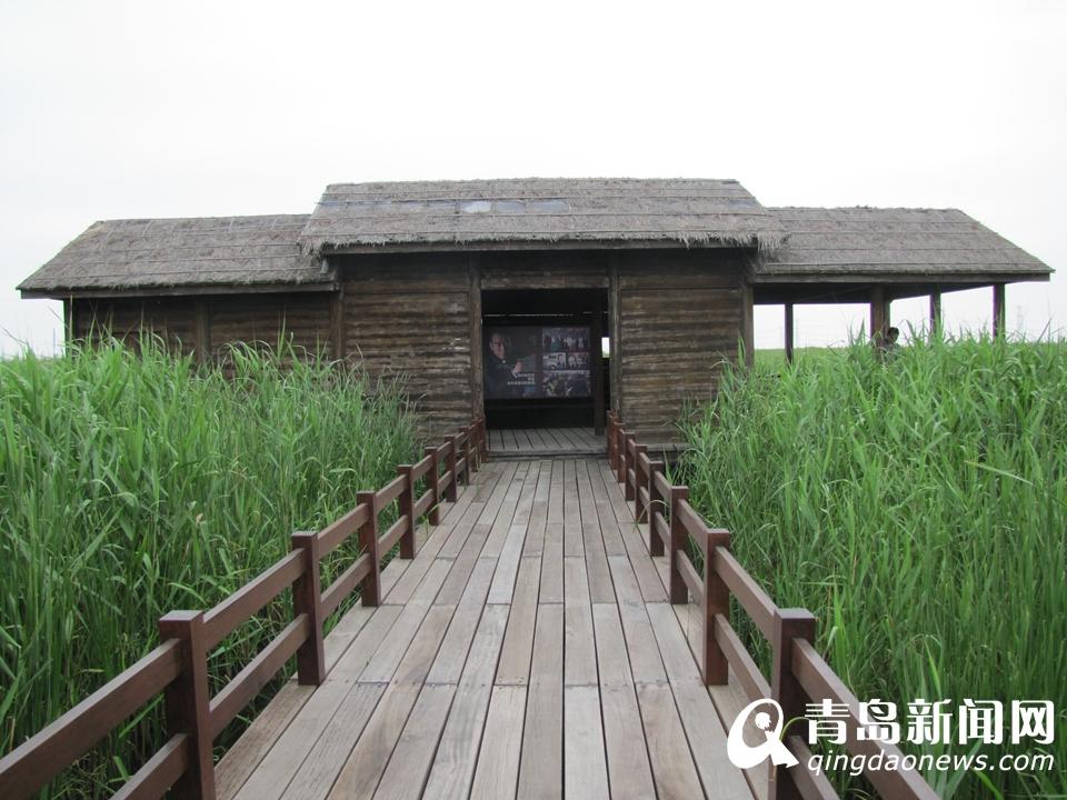 探访杭州湾国家湿地公园 电影搜索里的幸福屋
