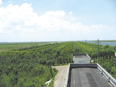 宁波沿海防护林基干林带发挥强大生态效益图片
