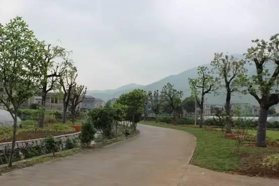 岙村拥有良好的山水资源,是名副其实图片