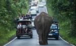 泰国大象公路上散步1小时