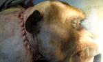 中国医生给一只猴子换头成功