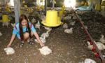 泰国军用直升机养鸡场附近降落 吓死2000只鸡