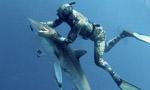 """美潜水员""""催眠""""鲨鱼取出鱼钩"""