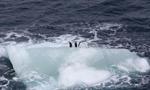 印象南极:冰山奇观