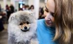 立陶宛首都举办国际宠物犬展