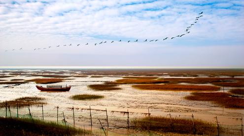 杭州湾国家湿地公园