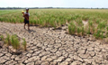 越南遭受百年不遇干旱