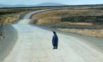 国王企鹅走失 独自觅路返家乡