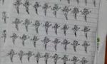 """学生打麻将被罚画100遍""""幺鸡"""