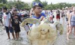 印尼海警营救31只走私珍稀大海龟