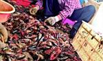 """加工厂回收死虾做成虾仁 厂方称只是""""脑死亡"""""""