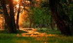 初夏额尔齐斯河河畔 宛若童话世界