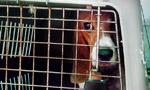 逃离黑暗实验室:156只小狗第一次看见阳光