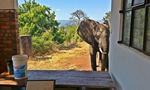 大象遭偷猎者枪击 到酒店求助人类