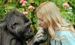 大猩猩40年学会数千个英语单词