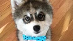 宠物狗自带眼线颜值超高走红网络