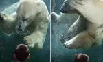 美4岁男孩与北极熊对视 画面温馨