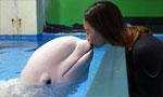 """极地白鲸的""""冰雪""""守护者"""
