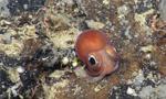 英水下机器人探索海底山脉