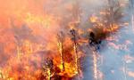山火肆虐!美南加州8.2万人疏散