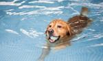 宠物游泳池高温下走俏