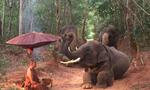 非摆拍!泰国一灵性大象跪拜苦行僧(图)